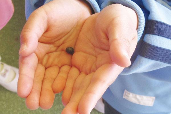 虫めがねで見たダンゴムシをかこう!(4歳児)