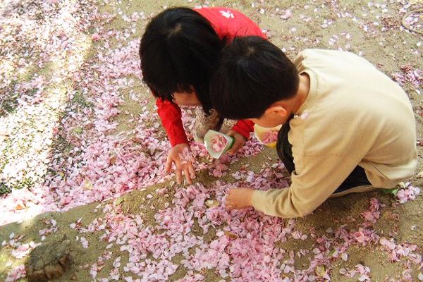 春の草花でアートしよう(4,5歳児)